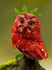 Owl_20300-e1584975193371