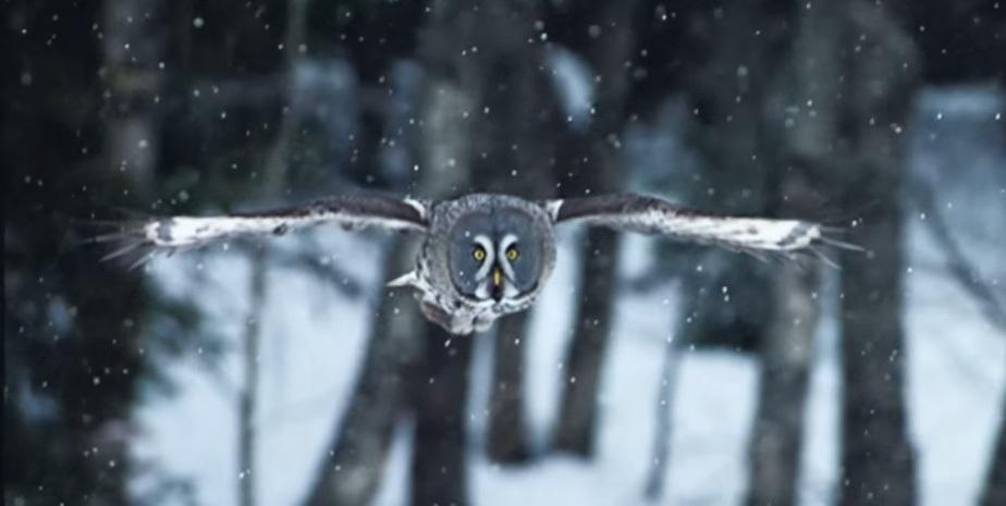owl-1_02