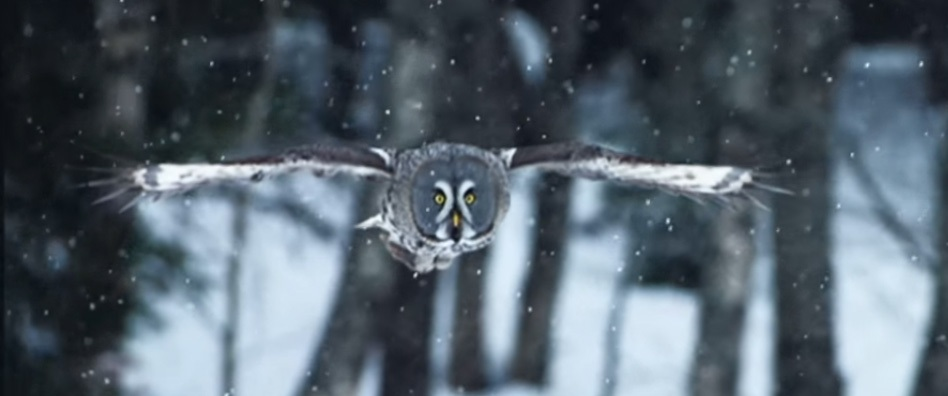 owl-1_03